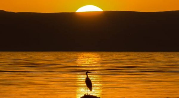 Guest Reviews - Heron watching the sunset over Arran